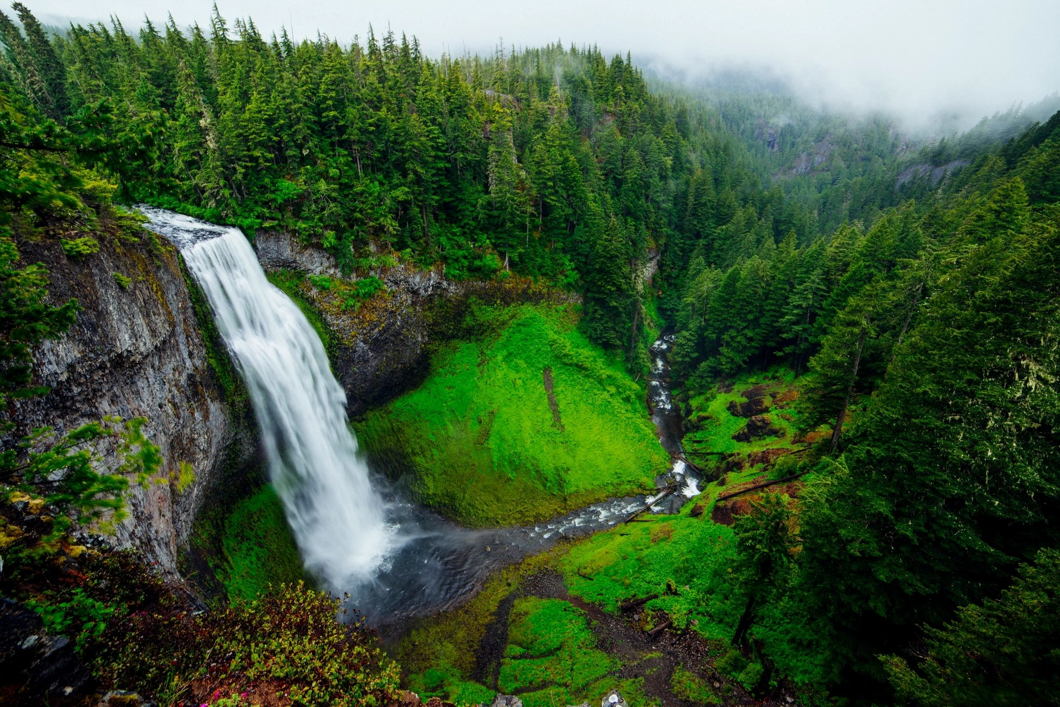 luxuriant-nature